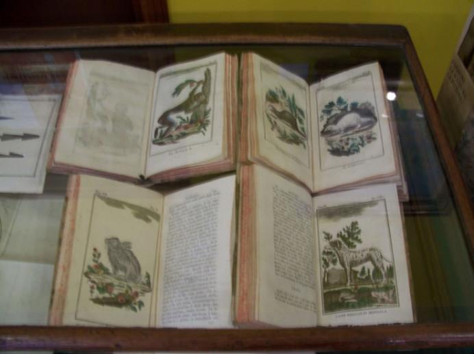 Collezione Maria Maddalena Rossi
