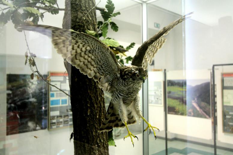 Museo Naturalistico F. Lombardi