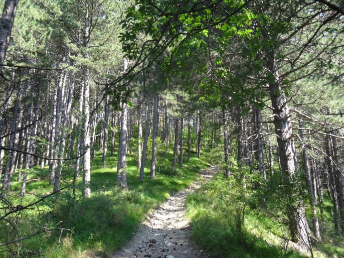 Monte Alpe: escursioni gratuite nella Riserva Naturale