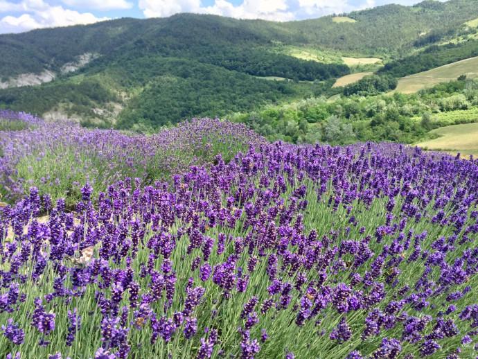 Anello di Costa Pelata: natura e biologico