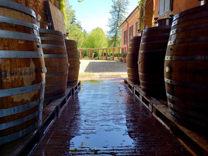 San Martino  il mosto diventa vino
