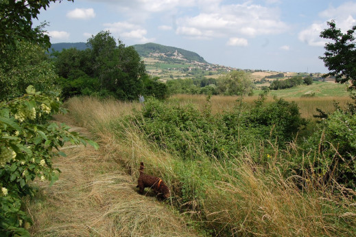 A caccia di tartufi in Oltrepò Pavese