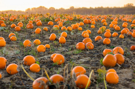 Pumpkin Patch, il Villaggio delle Zucche