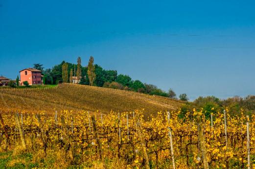 Strada vino e sapori Oltrepò Pavese: fra storia, gusto e tradizioni
