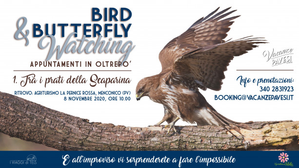 Appuntamenti in Oltrepò: bird and butterflywatching