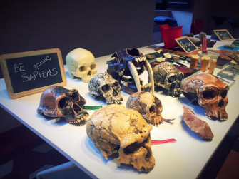Strani crani, teschi pazzeschi
