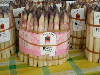 Asparago rosato di Cilavegna