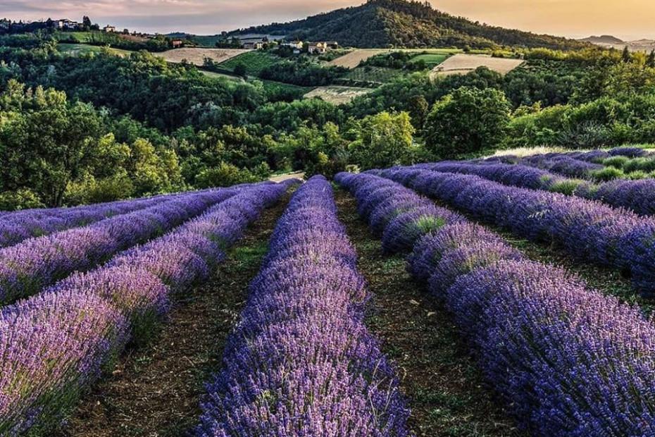 Cascina Costanza a Godiasco in loc. Alta Collina, è tradizione e innovazione. Vino, frutta, piante aromatiche e officinali, miele, prodotti cosmetici creati con le nostre materie prime.
