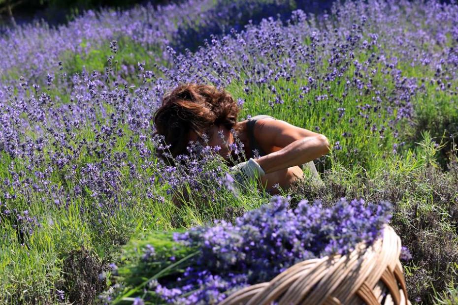 Az. Agricola Le Fragranze