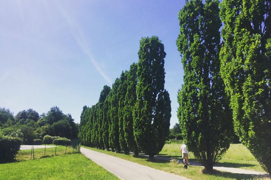 24. Da Monza a Milano