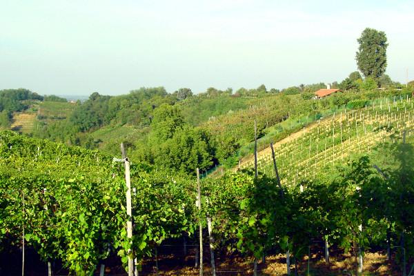 Collina del vino di San Colombano al Lambro