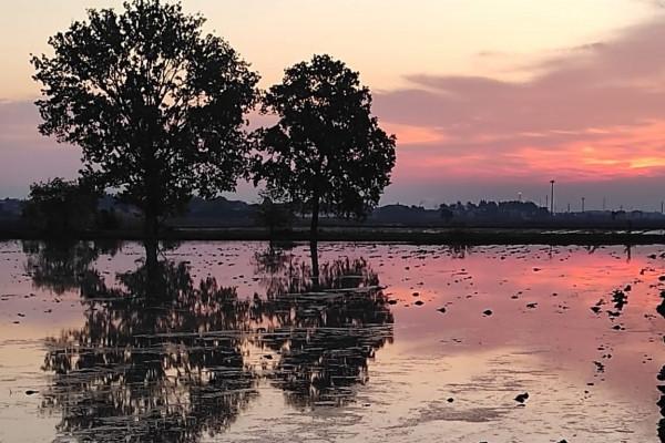 Risaie allagate al tramonto (Ph. Giulia Varetti Ricexperience®)